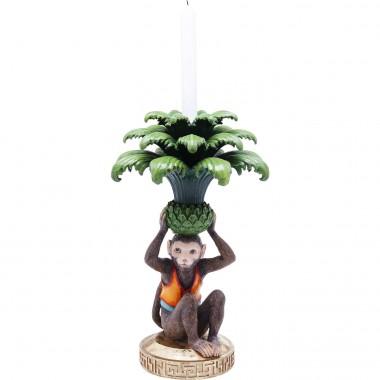 Castiçal Monkey Palm