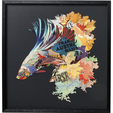 Quadro c/ moldura Art Betta Fish Colore Left 65x65cm