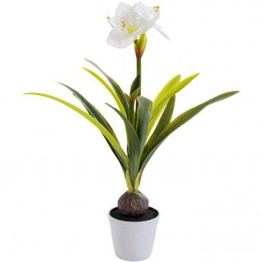 Plante décorative Amaryllis blanche 78cm Kare Design
